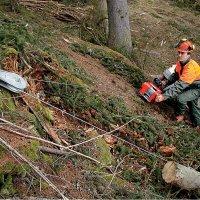 Verricello forestale per motosega principale
